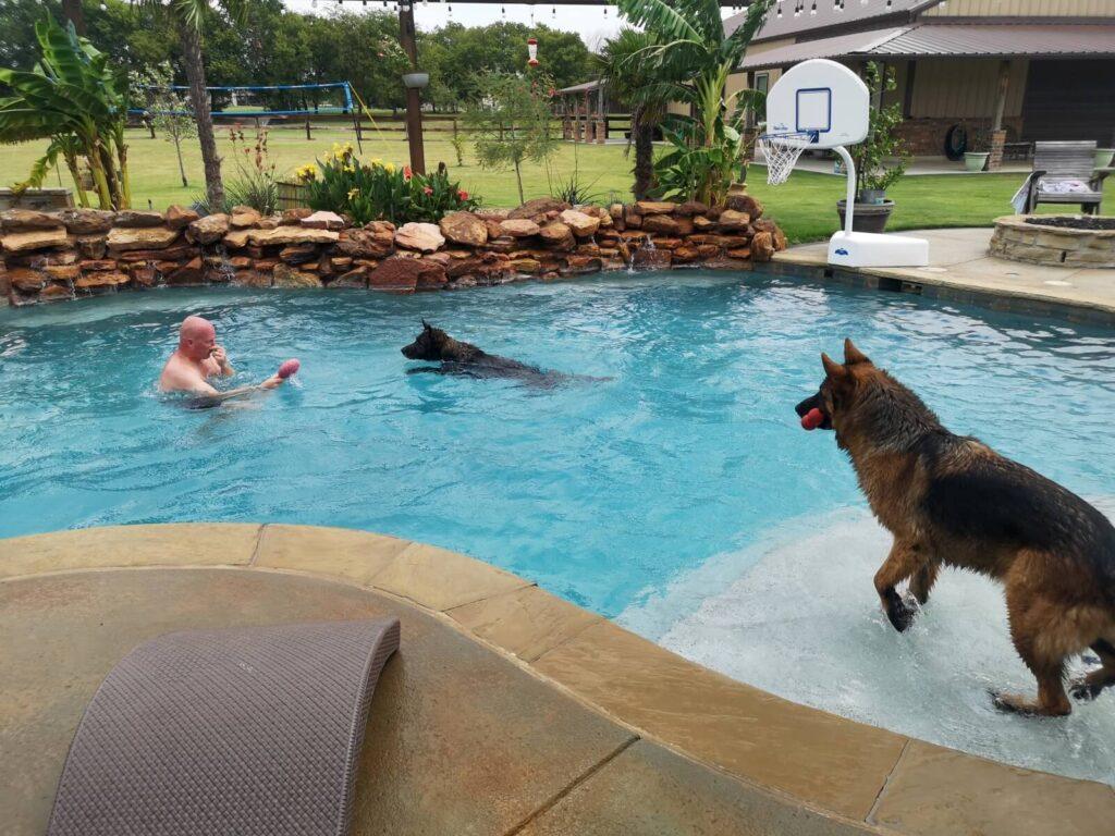 Hundeschwimmen in Ponder